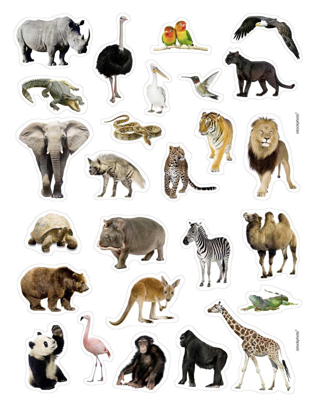 Au papyrus - Dessin animaux sauvages ...